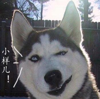 哈士奇搞笑图片表情包下载|哈士奇犯二表情包下载动态