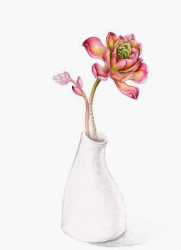 彩铅手绘多肉植物个性皮肤 谁陪我看透流年的风景