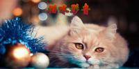 猫咪APP2.1